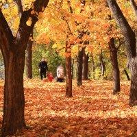 Прогулка в осень :: Татьяна Ломтева