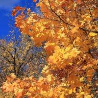 Осеннее золото :: Татьяна Ломтева