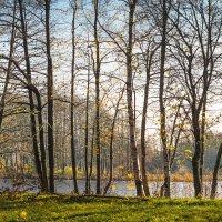 Поздняя осень :: Виталий