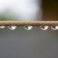 After the rain :: Максим Миронов