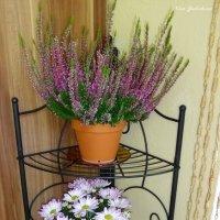 Вереск и хризантемы :: Nina Yudicheva