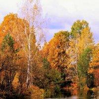Осень на реке Серёжа. :: Николай Масляев