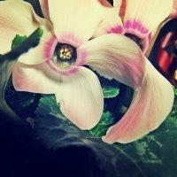 Flower :: Ольга Вишневская