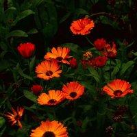 Осенние цветы :: Арсений Корицкий