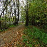 Настоящая осень :: Андрей Лукьянов