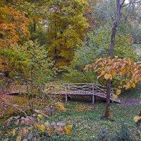 Березовый мостик :: Елена Чижова