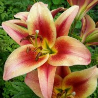 flower :: Элен