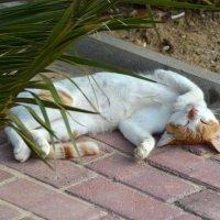 кошки Туниса (послеобеденный сон) :: Евгений Фролов
