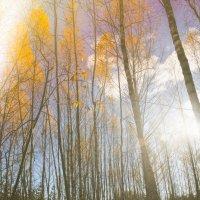 Золотая осень :: Sergey Nechaev