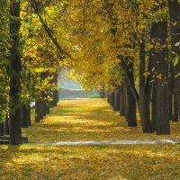 Аллея из желтых листьев в парке :: Сергей Тагиров