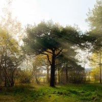 осень :: Alexey Gayun