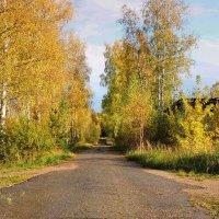Золотая осень-рыжая лисица :: Павлова Татьяна Павлова