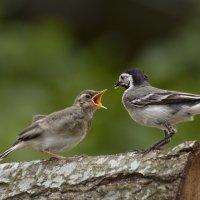давай быстрее! :: linnud