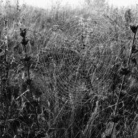Ловчья сеть :: анатолий томас