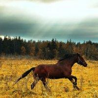 Несущаяся осень :: Анастасия Рыжова