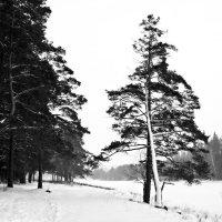 Зима-зима :: Александр Горбунов
