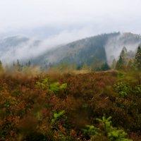 Мокрый октябрь на горе Ягодной :: Александр Крупский