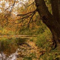Осенний этюд :: Константин Тимченко