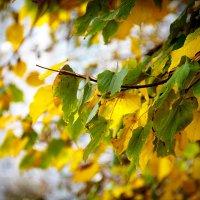 Осень :: Сергей Афанасьев