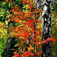 На палитре осень смешивала краски ... :: Евгений Юрков