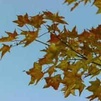 Осень :: Дима Пискунов