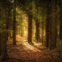 Утро в лесу :: Алексей Строганов