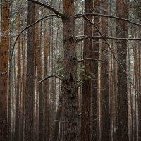 фотофест Каракан :: Yulia Golub