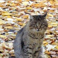 Осенний кот :: Александр Поздеев