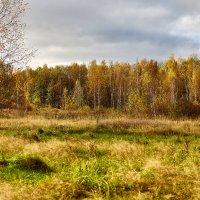 Осень :: Сергей Козлов