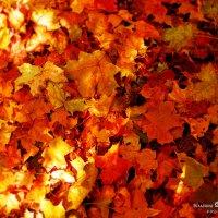 ковер осенних листьев :: Елена Волгина