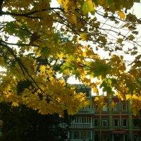 Осень в Кисловодске 2016 года :: татьяна