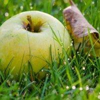 Яблоко на траве. :: ния