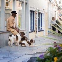 Три собаки :: Арвидс Гурскис