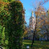 Осенью стало лучше видно архитектуру. :: Владимир Безбородов