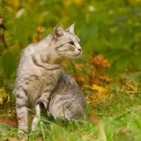 осенью в парке :: Lemura