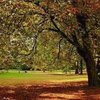Порыжело в парке :: Alexander Andronik