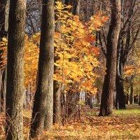 В старом парке тишина :: Татьяна Ломтева