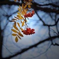 Завтра зима... :: Борис Гуревич