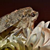 Бабочка на цветке :: Клара