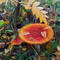 В осеннем лесу :: Валерий Шибаев