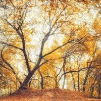 Осень :: Егор Балясов