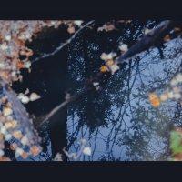 Около Гейзерного озера :: Elena Nikitina
