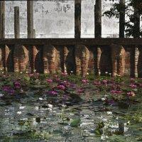 Лиловые лотосы-цветы Будды. Жаркий январь на Цейлоне. :: Юрий Воронов