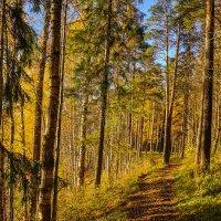 Тропинка в осеннем лесу :: Анатолий