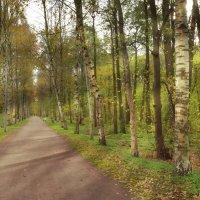 аллейка в парке :: Наталия П