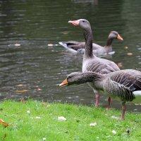 В городском парке(Кассель,Германия) :: Сергей Галкин