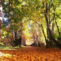 Золотая осень :: Марина Назарова