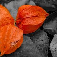 нотка оранжевого :: Олег Лопухов