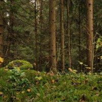 Лесные картинки ... :: Va-Dim ...