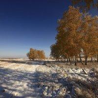И слышатся песни, осени снежной 4 :: Сергей Жуков